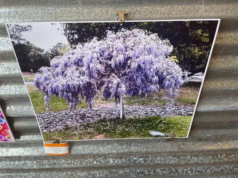 """Wisteria"" A Photographic expression of color by Janet Thornton Galleries at Roadrunner Emporium Alamogordo"